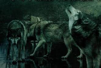 Takhini Wolves