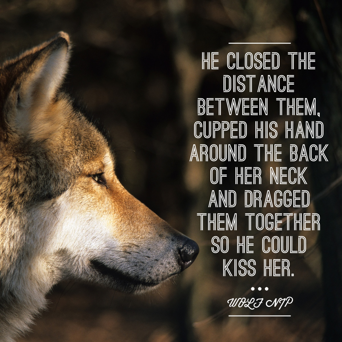 Wolf Quotes And Sayings