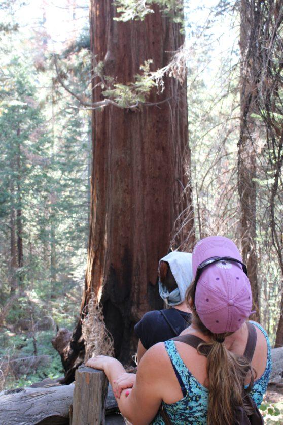 16-big-tree-yosemite